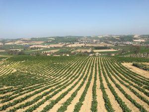 イタリア採種地3