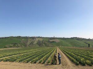 イタリア採種地
