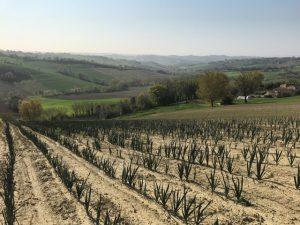 イタリア採種地2