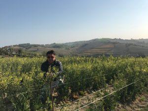 イタリア採種地5
