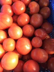トマトハウス3